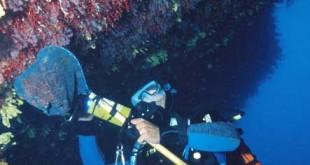 du-corail